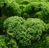Kale Quinoa Power Salad
